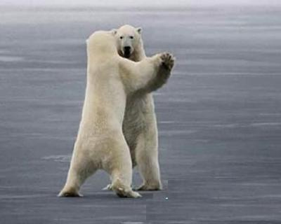 polar-bear-waltz.jpg